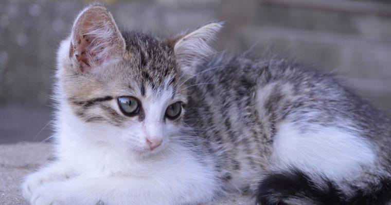 Guide: Sådan sørger du for, at det kun er din kat, der kan komme ind ad kattelemmen
