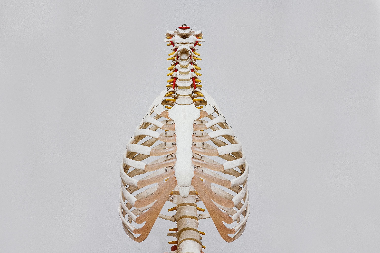 Exoskelettet afhjælper belastende arbejdssituationer